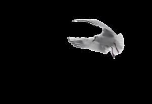 pigeon-1643090_640